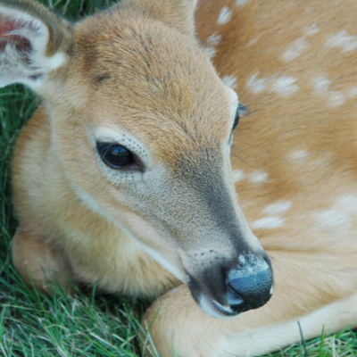 Bambi – Highly Sensitive Professionals